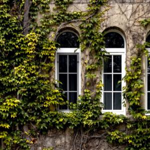 Aldo okna nietypowy kształt 3